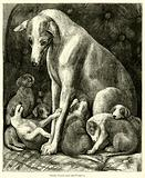 Italian Greyhound and Puppies