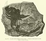 Le plus ancien animal terrestre connu