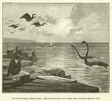 Au lieu de Paris, c'etait la mer... des pterodactyles aux larges ailes sautaient dans le ciel