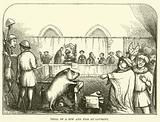 Trial of a sow and pigs at Lavegny