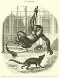 Museum d'histoire naturelle, Le Chimpanze et les Coatis dans le palais des Singes