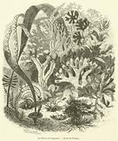 Les Plantes de l'Aquarium