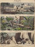 South America: estuary in Guyana; jungle in Brazil; Chilean Andes