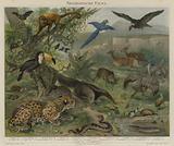 Neotropical fauna