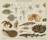 Development of marine life