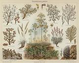 Steppe plants