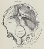 Occipital bone, inner surface