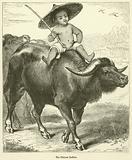 The Chinese Buffalo