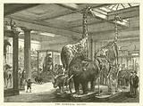The Mammalia Saloon