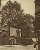 A favoured inmate of the City: the plane-tree in Cheapside