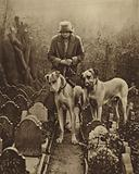 Two Great Danes look in vain for a vacant plot in the Dogs' Cemetery