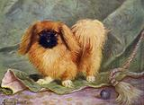 The Pekinese, Champion Chu-erh of Alderbourne