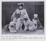 Group of Mrs Philip Runciman's Sheepdogs
