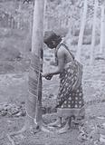 Tapping Rubber Trees, Showing one of the many systems used