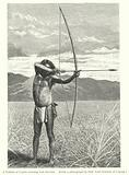A Veddah of Ceylon shooting with the bow