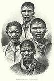Bushmen of Cape Colony