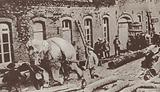 Circus elephant commandeered by the Germans to haul timber for trench props to the front, World War I, 1915