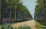 Palm Avenue, Botanical Gardens, Calcutta, India