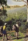 Tasmania: Hikers near Mount Olympus