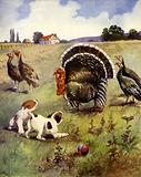 Turkeys in Trouble