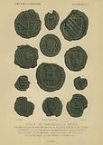 Seals of the guilds of Bruges, 14th Century
