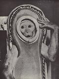 Sam, the space monkey