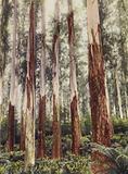 A Forest Glen