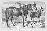 Portrait of Empress, by Emilius, out of Mangel Wurzel; and her Foal, own Sister to Autocrat