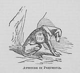Attitude in Pneumonia