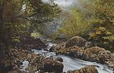 Ireland: In The Dargle, County Wicklow