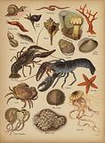 Page from The Little Folks' Picture Natural History, c 1900