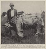 Flyproof kit for cattle in the tsetse-infected country of Rhodesia