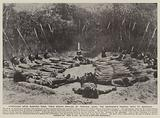 Stretched upon burning sand, their bodies broiled by tropical suns, the aborigine's painful path to manhood