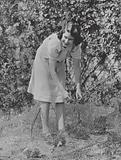 Princess Elizabeth, daughter of King George VI and Queen Elizabeth, netting strawberries to protect them from the birds