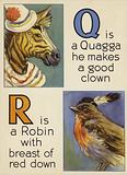 Q is a Quagga he makes a good clown; R is a Robin with breast of red down