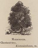 Le Vocabulaire Illustre: Marronnier; Chestnut-tree; Kastanienbaum
