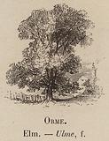 Le Vocabulaire Illustre: Orme; Elm; Ulme