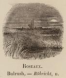 Le Vocabulaire Illustre: Roseaux; Bulrush; Rohricht