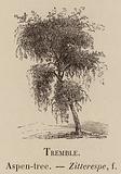 Le Vocabulaire Illustre: Tremble; Aspen-tree; Zitterespe