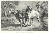 Couple de chiens, par M Jules Gelibert