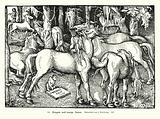Stallions and mares