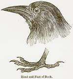 Head and Foot of Rook