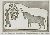 Human and Animal Form, drawn by Bushmen of South Africa