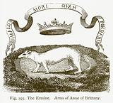 The Ermine. Arms of Anne of Brittany.