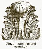 Architectural Acanthus