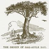 The Origan of Oak-Apple Day