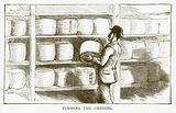 Turning the Cheeses