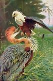 Battles of the Wild. Giant Heron and Sea Eagle in Deadly Combat