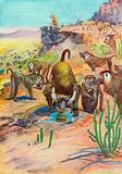 Baboons in their Rocky Home