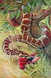 """Nature Red in Tooth and Claw"" Python Killing a Parrot"